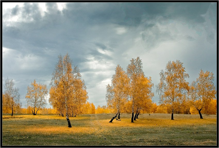 осень,жёлтый,оранжевый,ненастье,октябрь,сентябрь, Качурин Алексей