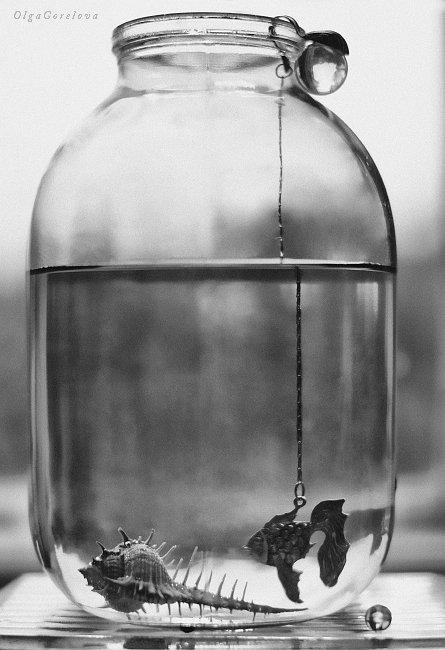 sea, heat, water, glass, silver, fish, фото, стекло, море, рыба, натюрморт, Ольга Горелова