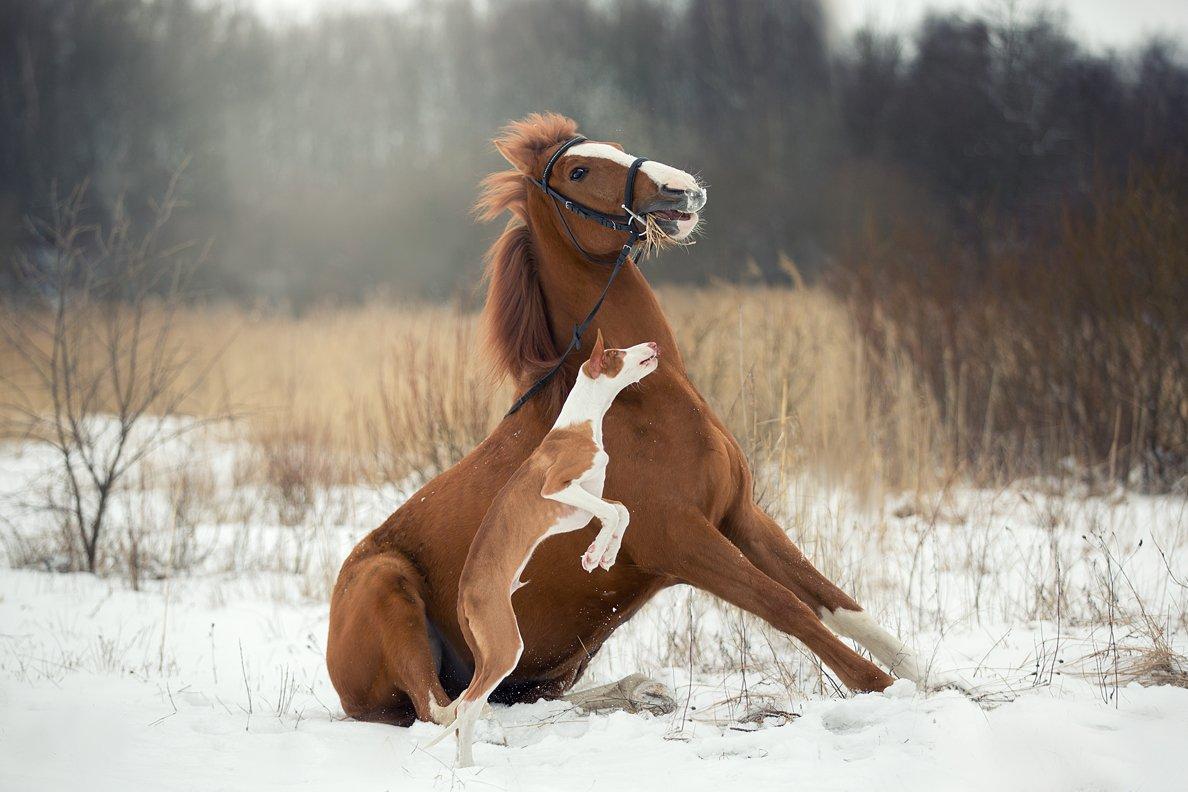 собака, конь, лошадь, зима, рыжие., Светлана Писарева