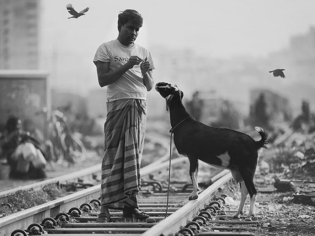 коза, рельсы, поезда, шпалы, мужчина, коршуны, птицы, улица, железная дорога, бангладеш, Алла Соколова