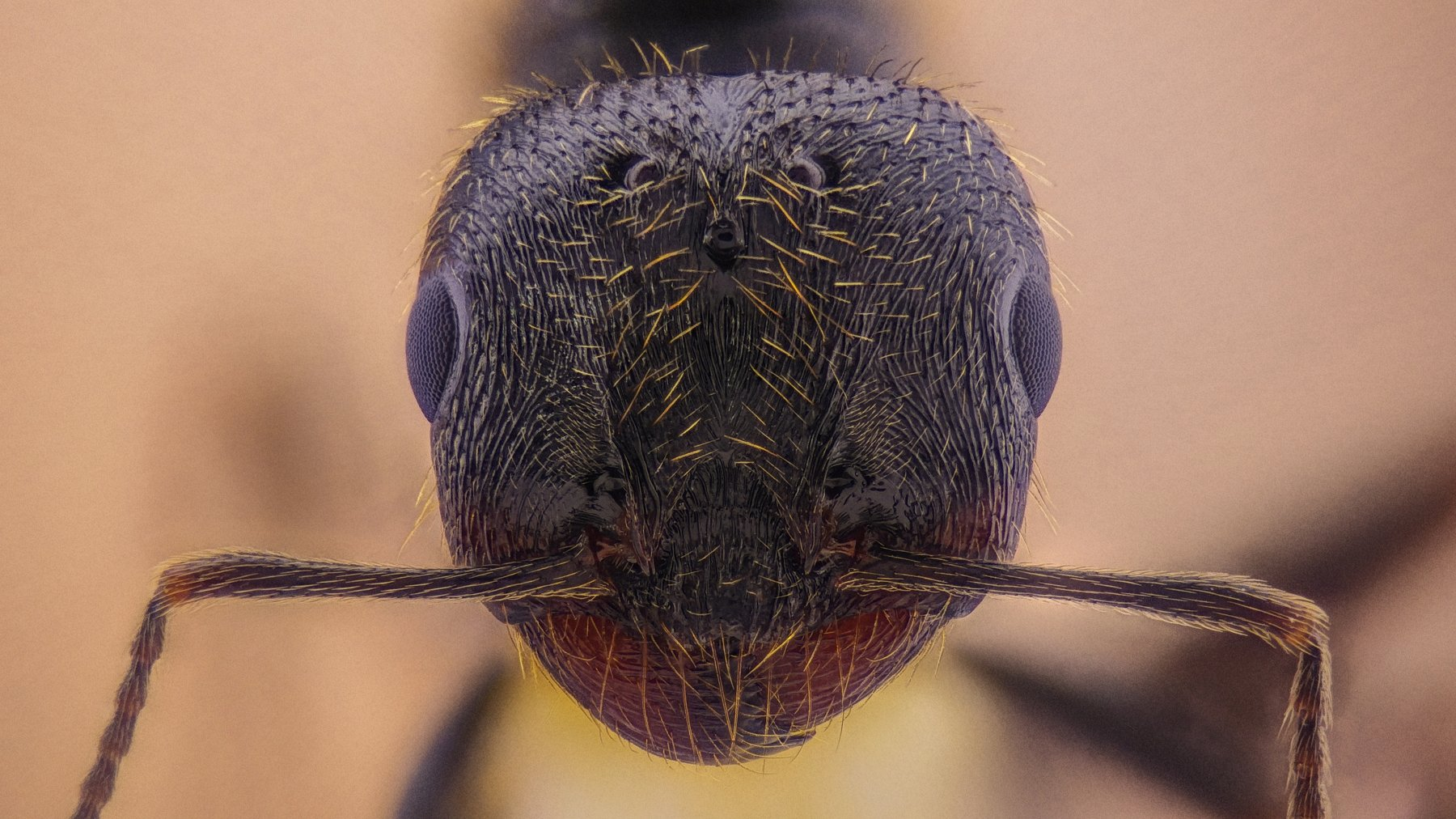 ceclii,macro,lgg4, extremmacro, муравей, мравка, Цветан Ганев