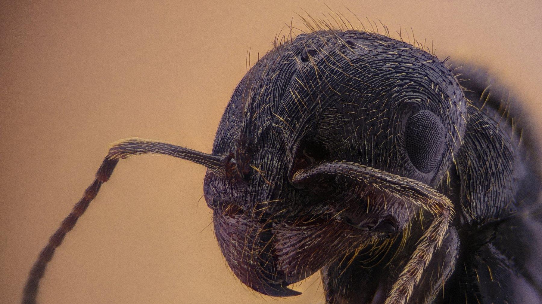 ceclii,macro,lgg4, extremmacro, муравей, мравка, макро, Цветан Ганев