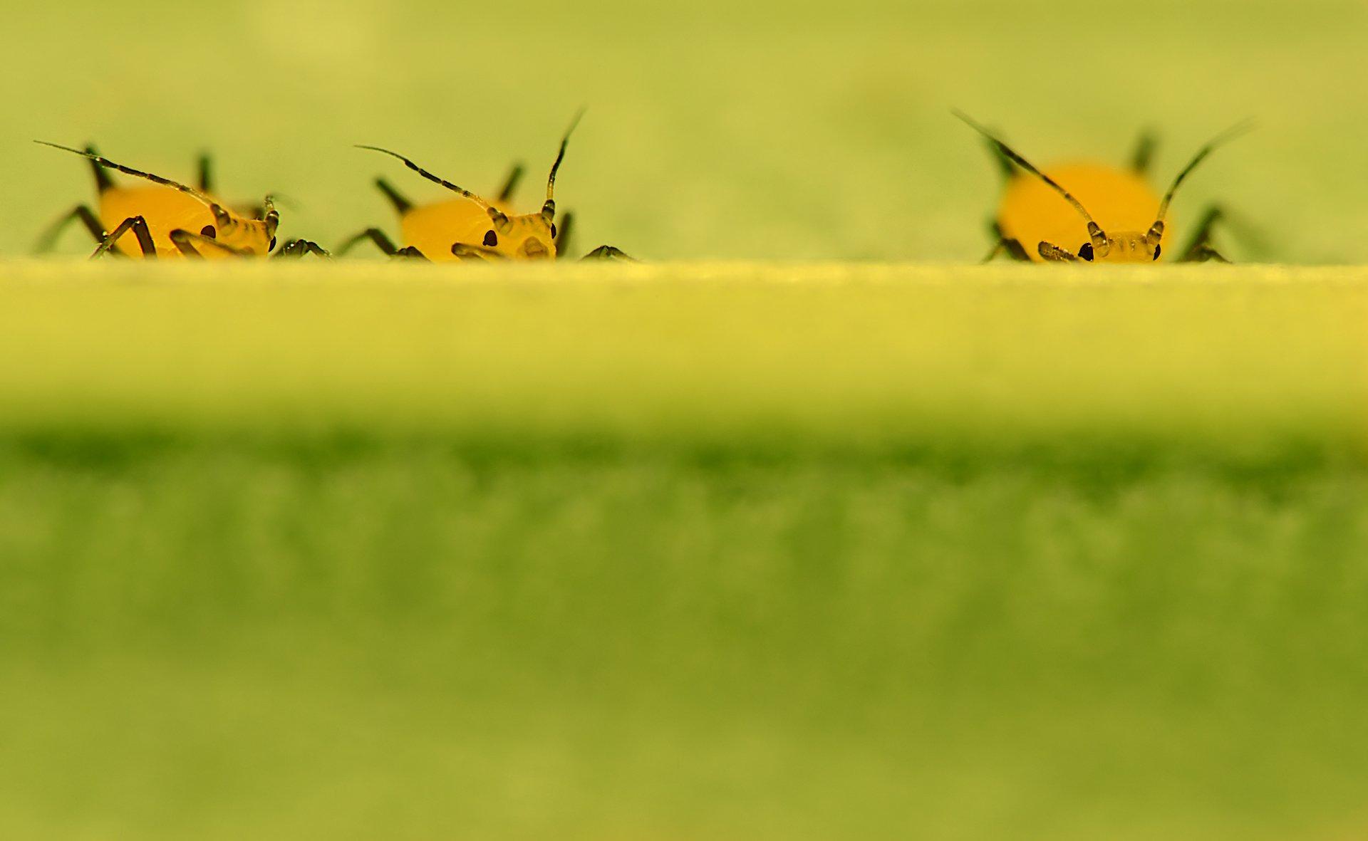 тля желтая лист наблюдатели насекомые, Алёна Шевцова