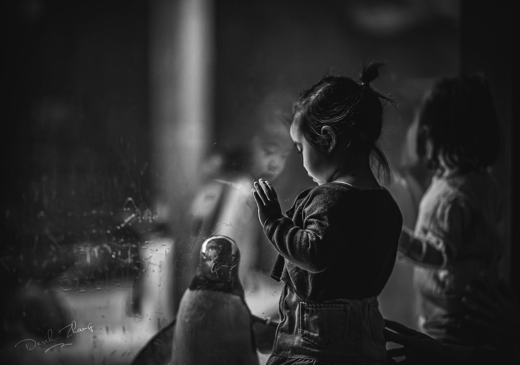kid, child, girl, animal, penguin, glass, mirror, watching, Derek Zhang