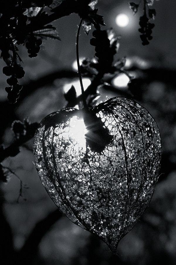 wake,macro,sony,light,time,memory,delicate,moon,b&w,, Emerald Wake ©