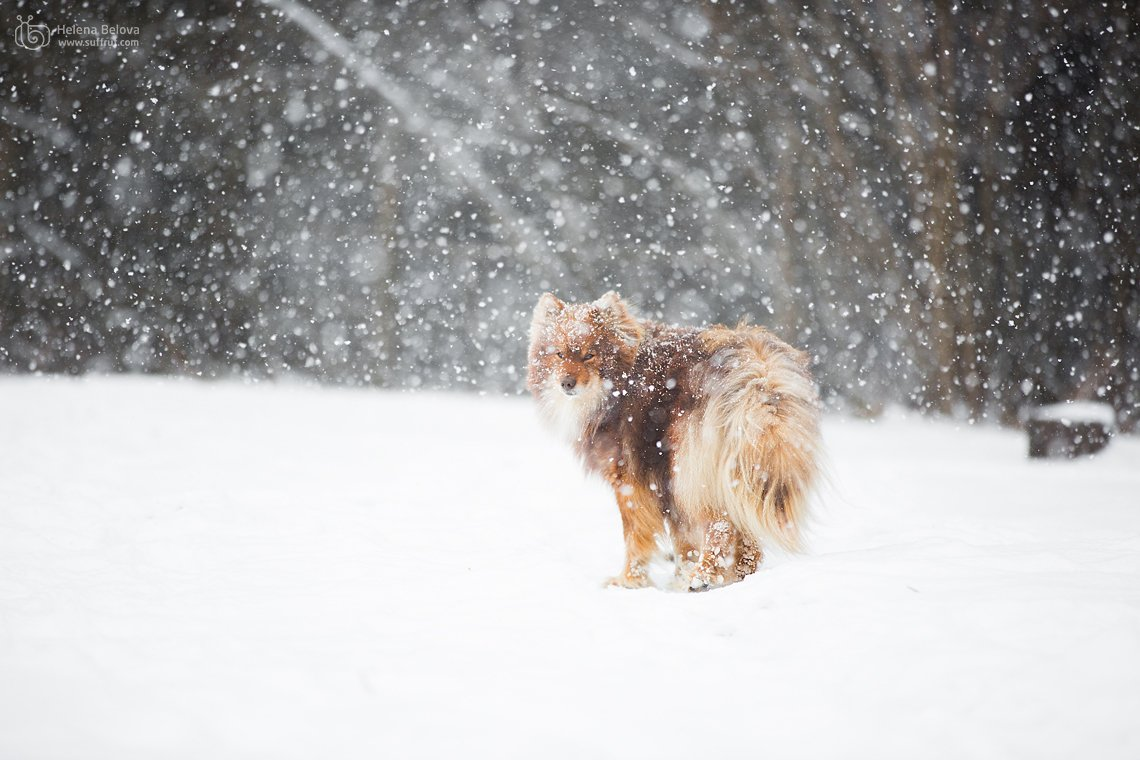 животные, пёс, Helena Belova