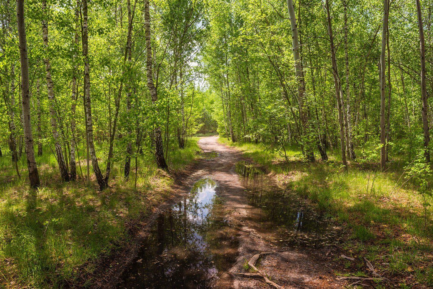 весна, май, лужи, Галанзовская Оксана
