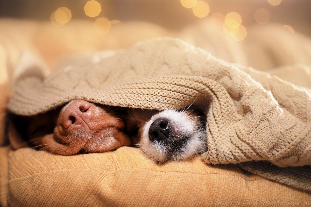 Собака, собаки, уютный, носик, Анна Аверьянова