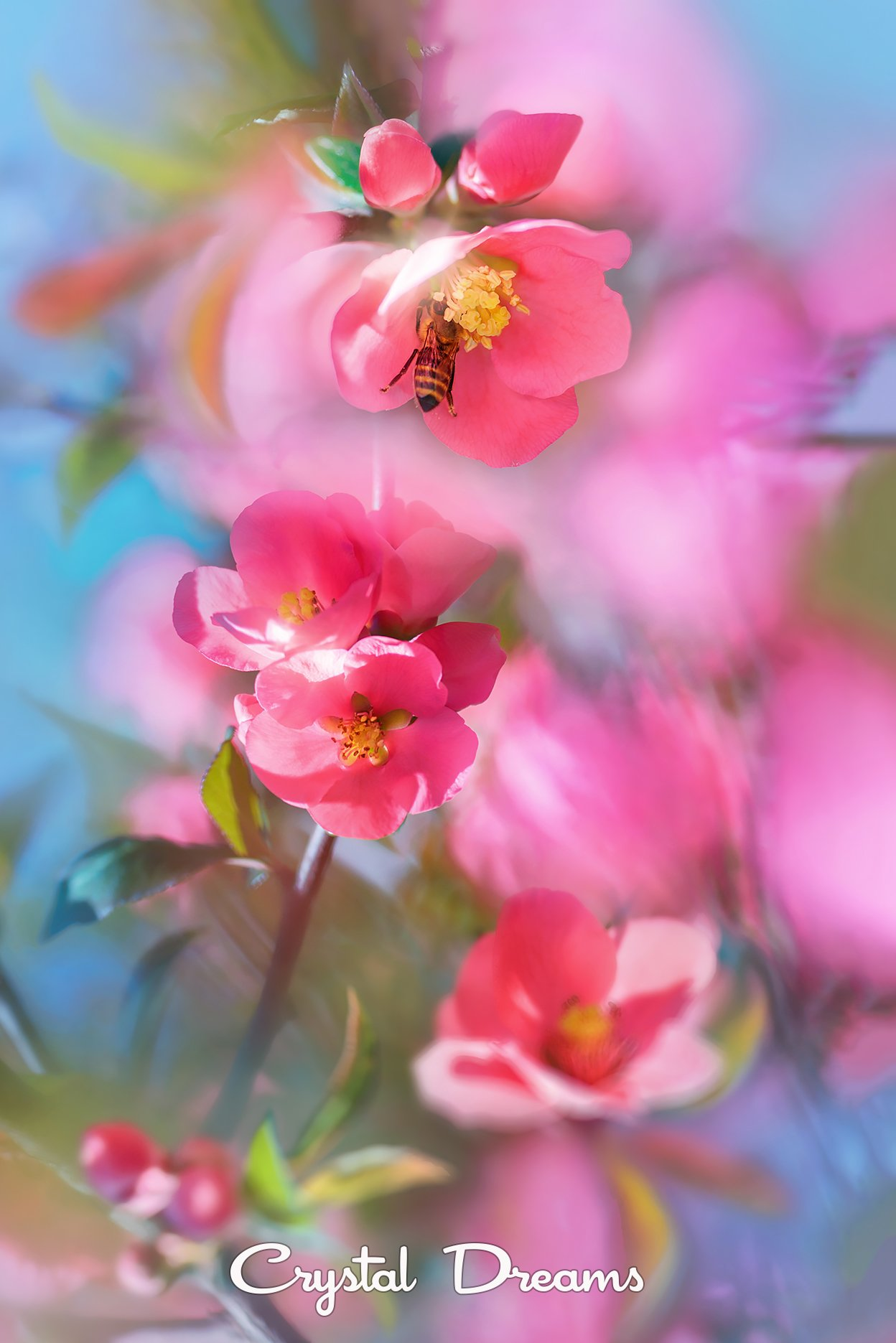 crystal dreams, macro, spring, color, art, nature, bee, Крылова Татьяна