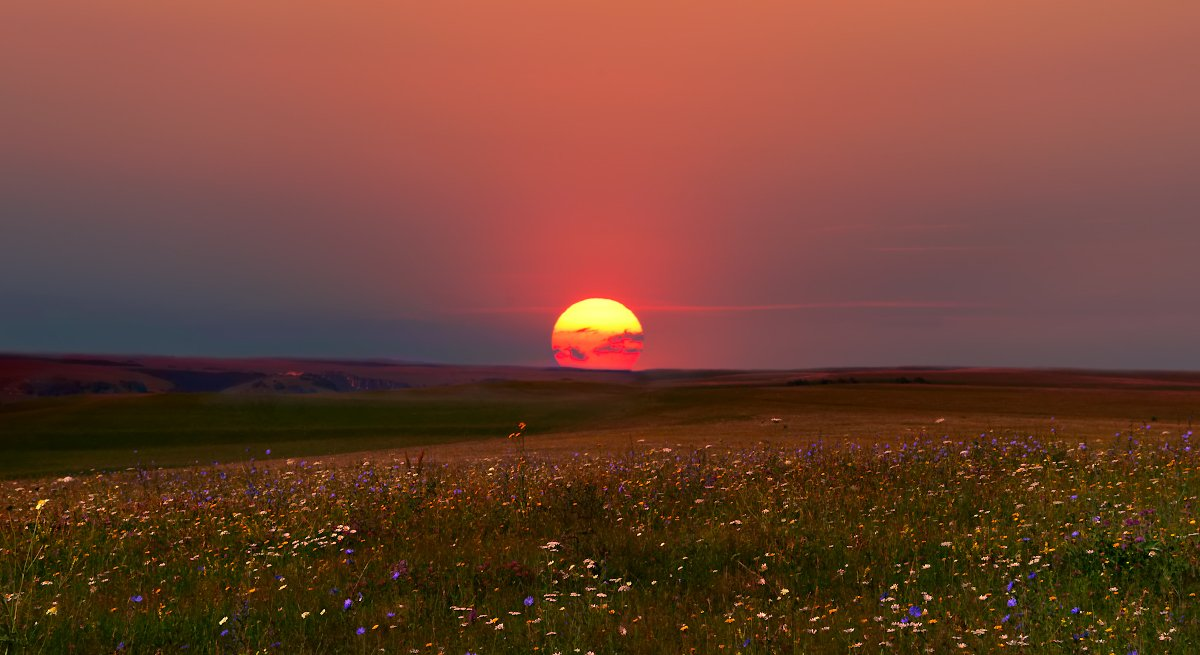 Аромат июньского заката. Фотограф Елена Брежицкая