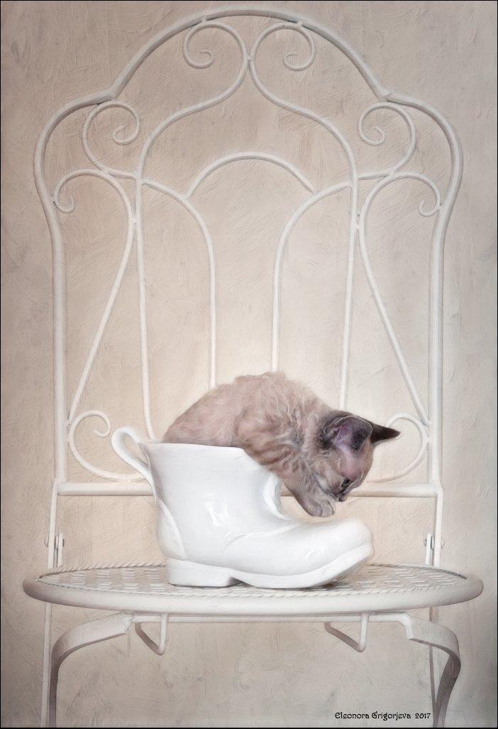 котёнок, башмак, туфелька, девон-рекс, натюркотики, Eleonora Grigorjeva