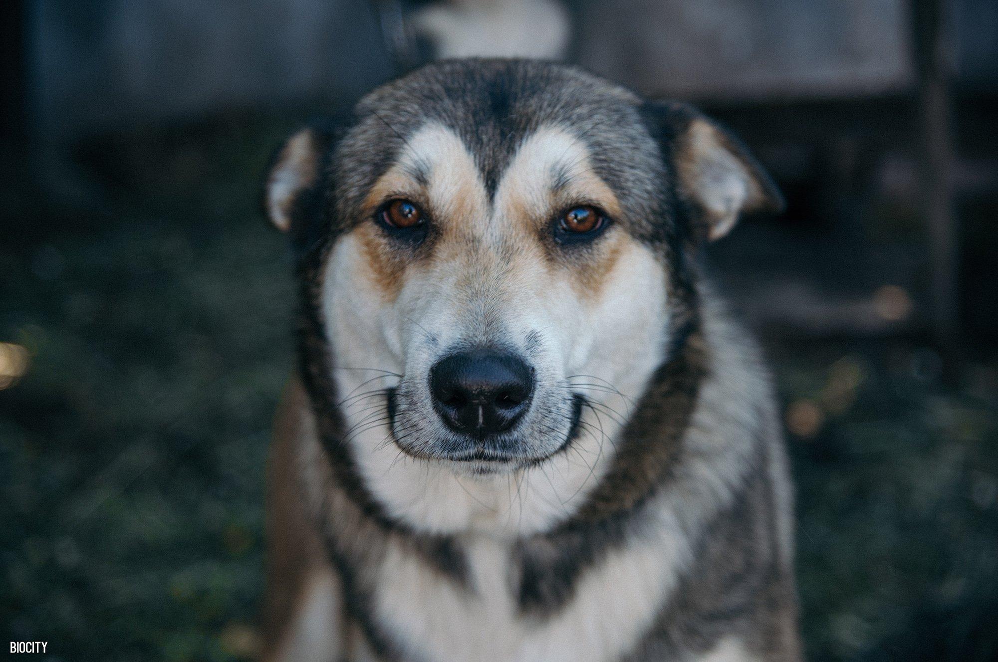 biocity, smile, dog, собака, пес, улыбака, улыбка,, Biocity
