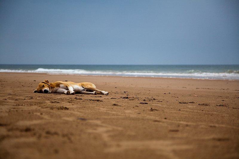марокко, легзира, пёс, собака, океан, путешествия, dobro_pobedit