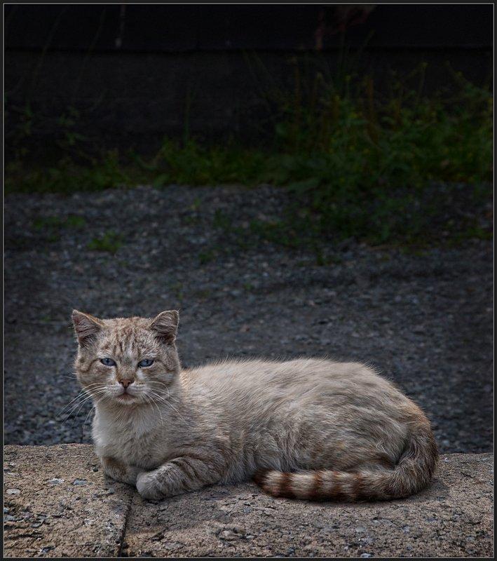 сибирский сфинкс