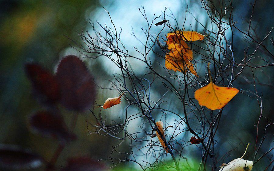 осень, листья, лес, кусты, baarseek
