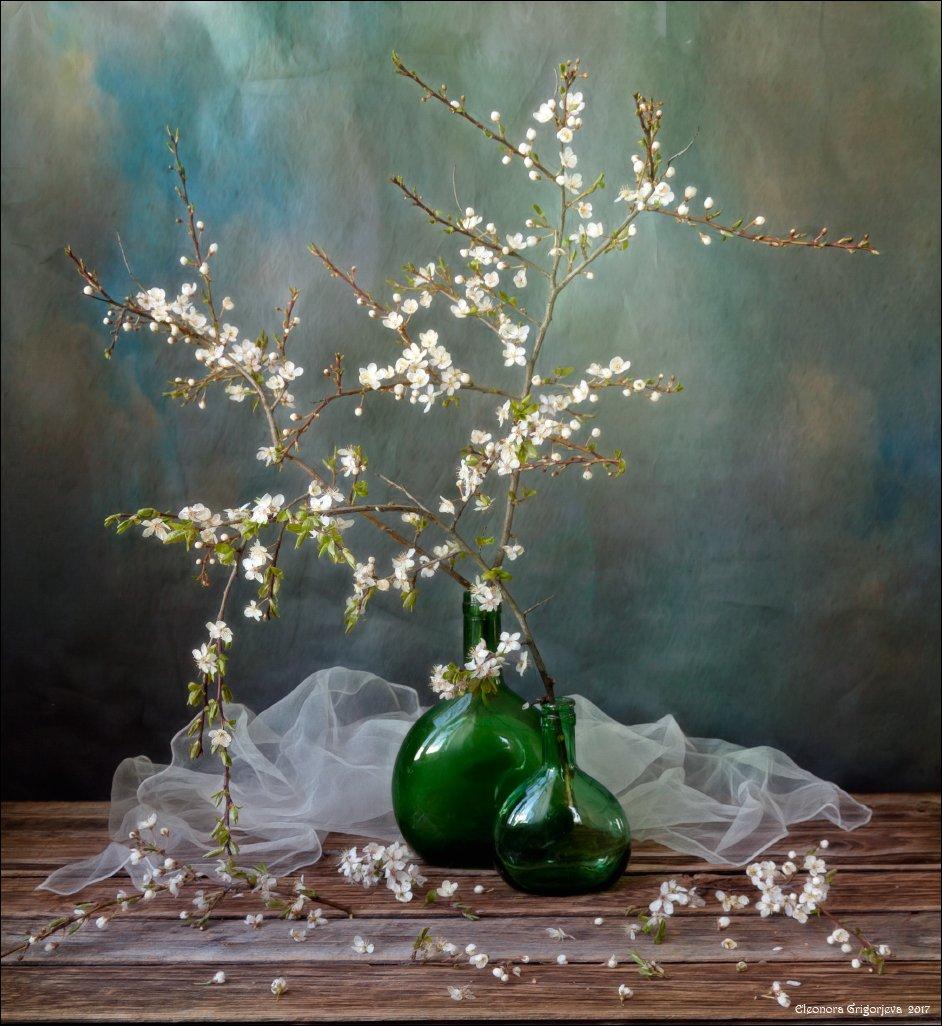 алыча, слива, цветущая, ветки, белые, цветы, весна, цветение, натюрморт, ожидание, долго, нежность, Eleonora Grigorjeva