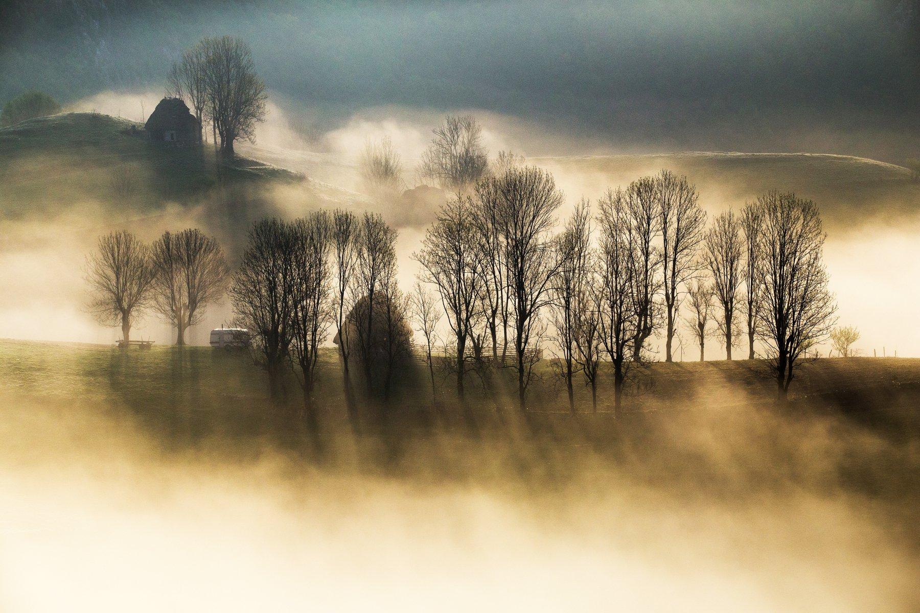 light,mist,fog,nature,trees,hill,apuseni,romania,, Marius Turc