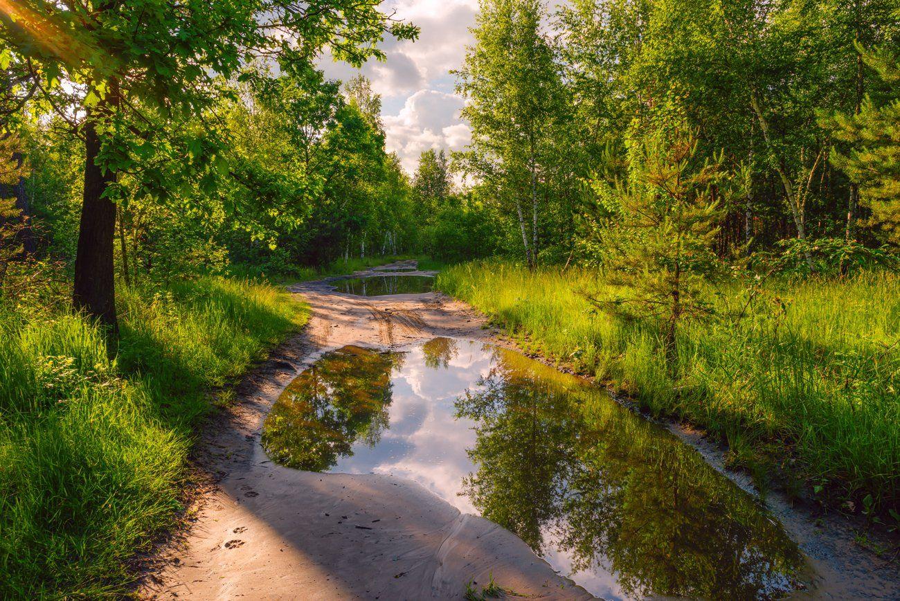 лес, весна, май, лужи, вечер, Галанзовская Оксана