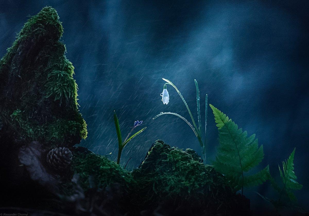 украина, коростышев, весна, лес, красота, макро, макро мир, природа, макро-красота, макро цветы, пролески, цветы, макросьемка, чорный,, Александр Чорный