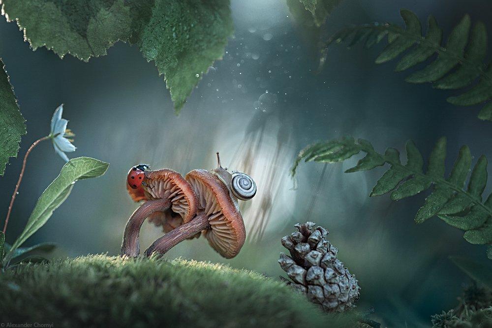 oleksandr chornyi, украина, коростышев, весна, лес, красота, макро, макро мир, природа, макро-красота, макро цветы, цветы, макросьемка, грибы, мох, сказка, чорный,, Александр Чорный