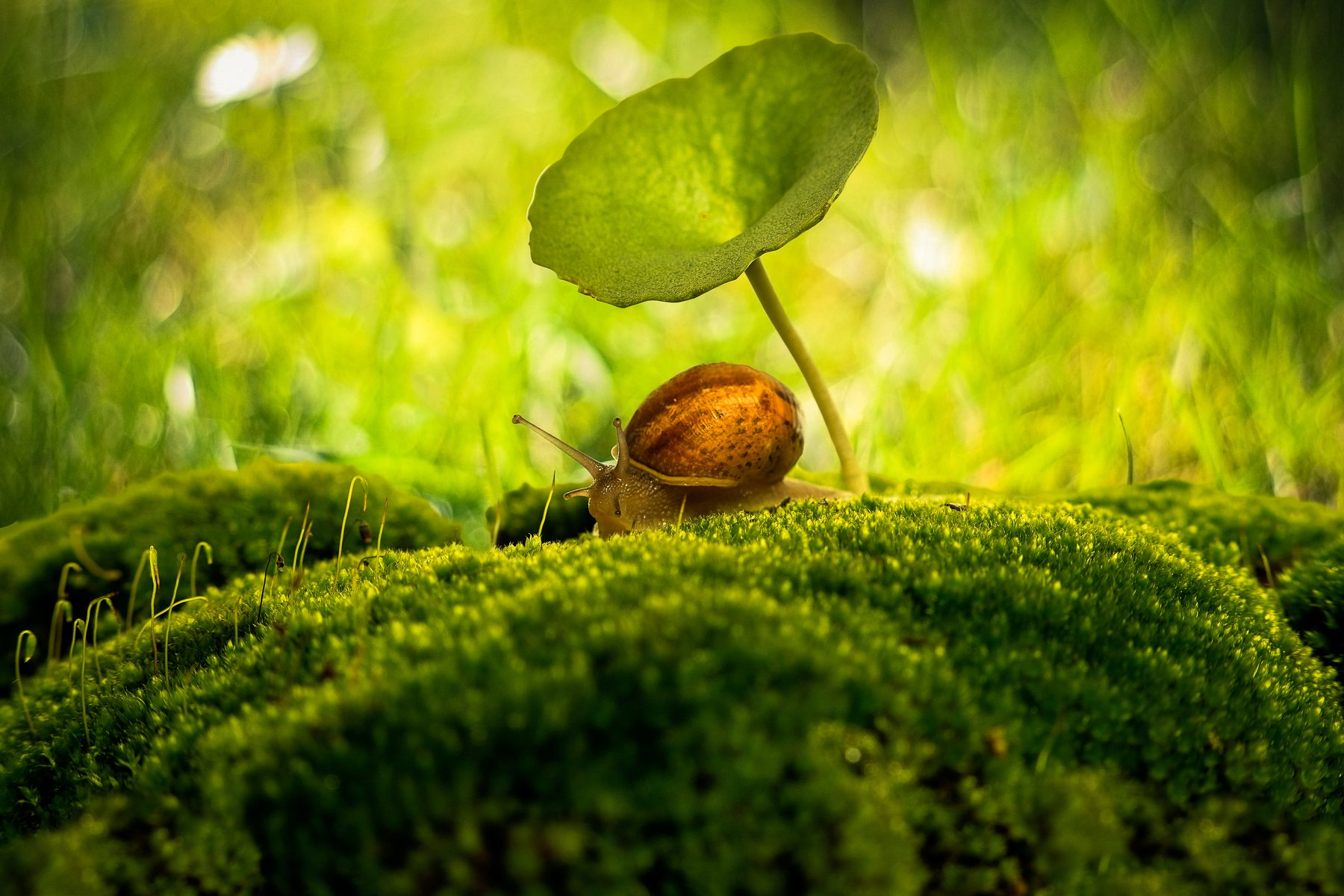 snail, moss, macro, green, nature, close-up, ground, morning, center, Улитка, мох, макро, зеленый, природа, крупный план, земля, утро, центр, Antonio Bernardino