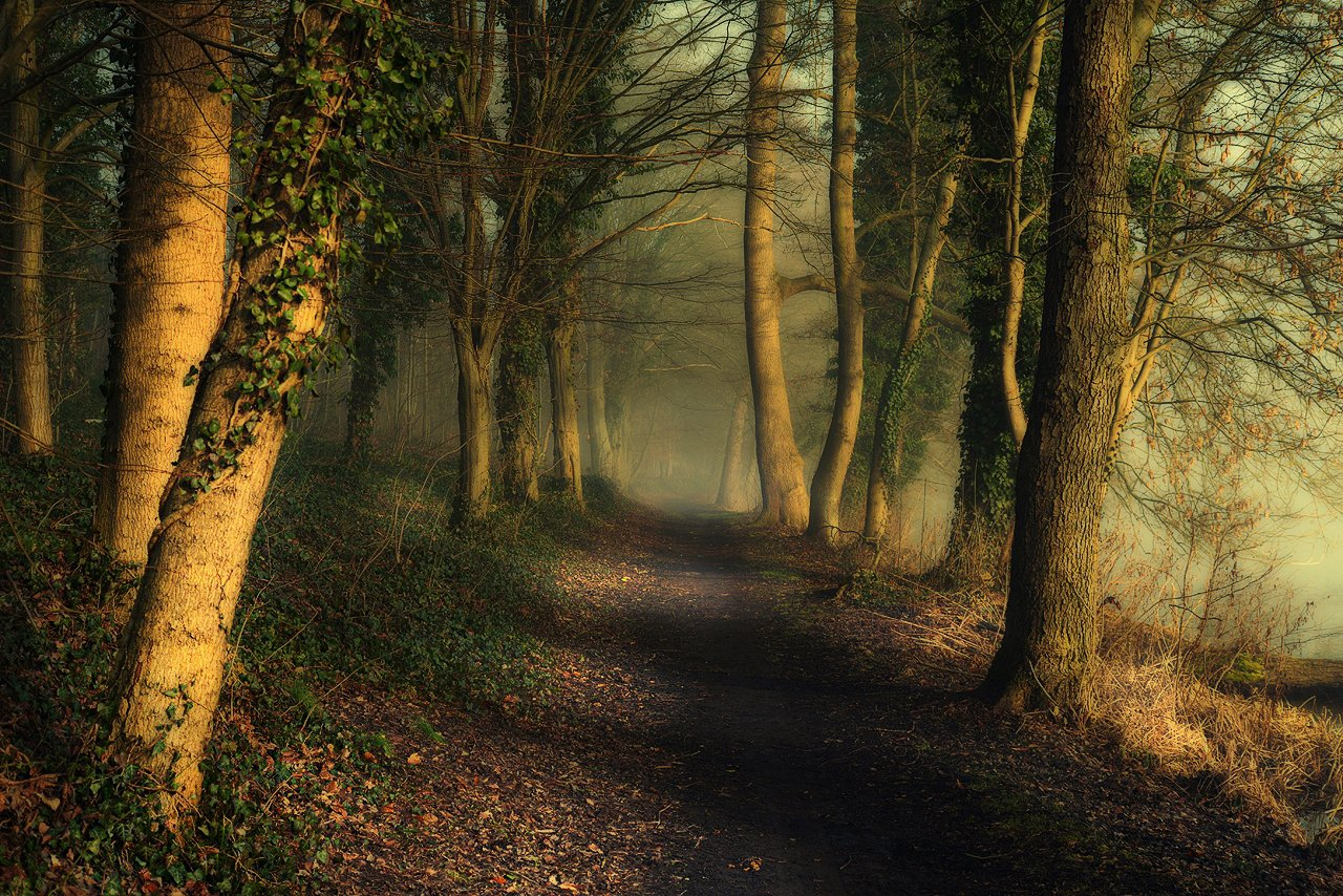 magic alley alejka trees path mist magic foggy road leaf green poland, Radoslaw Dranikowski