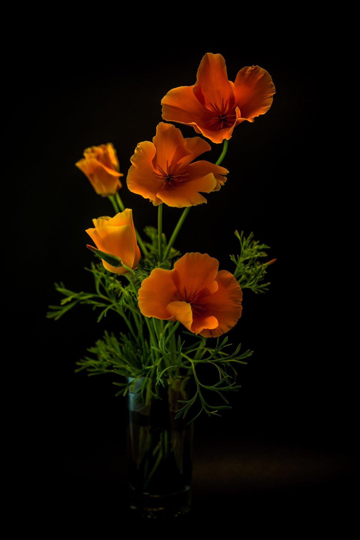 fragile, still life, interior, flowers, poppies, orange, green, background, Antonio Bernardino
