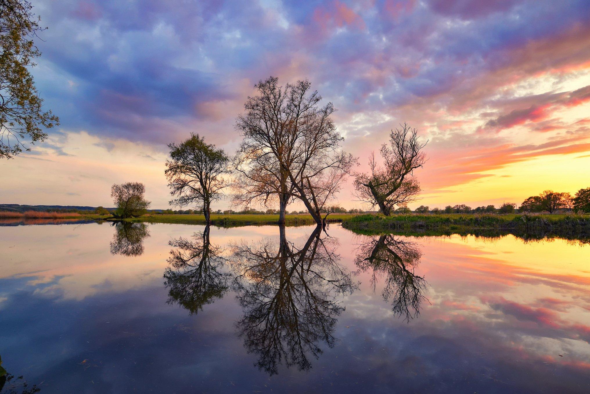 reflection odra mirror water poland tree trees silence dranikowski magenta sunset, Radoslaw Dranikowski