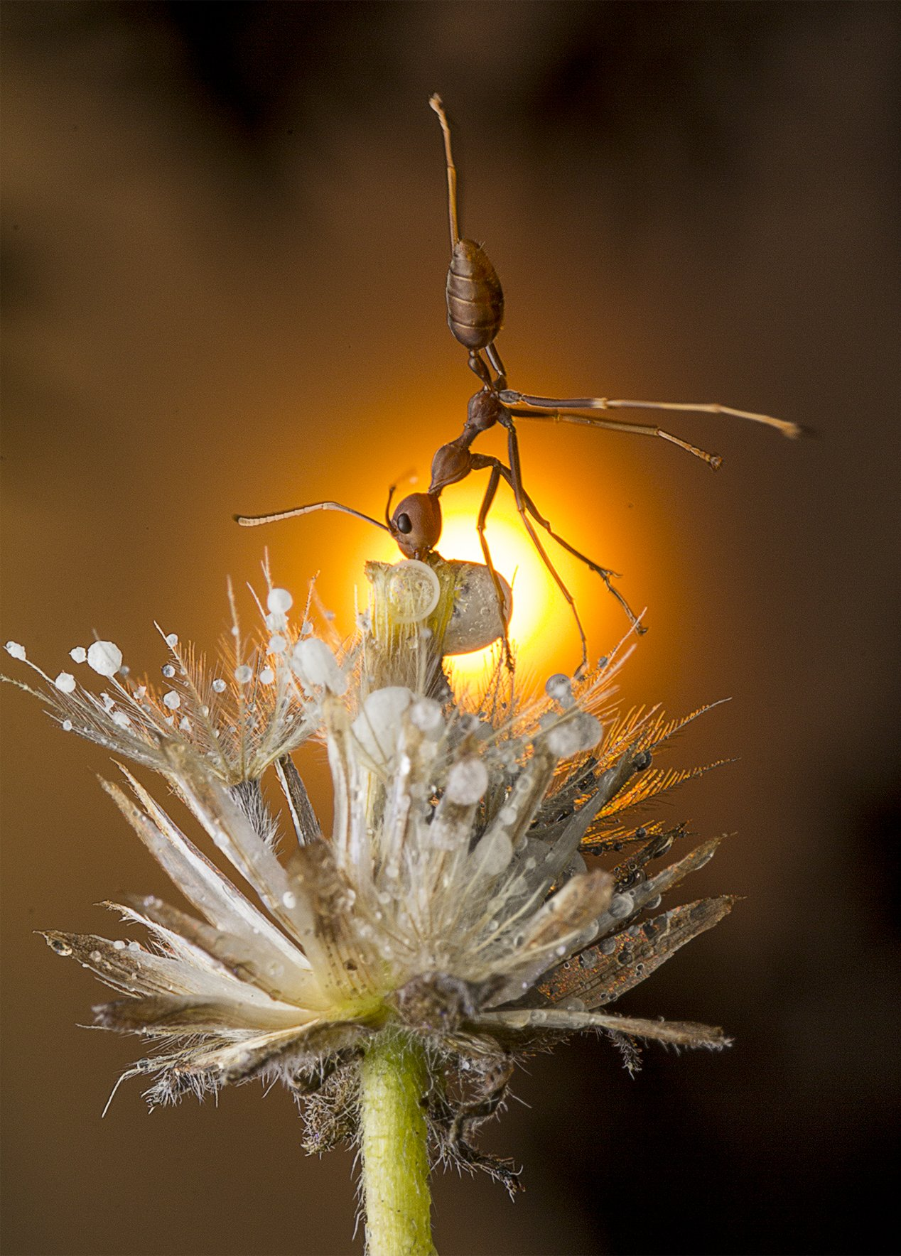 #macro#ant#sunset#colors, Lim Choo How