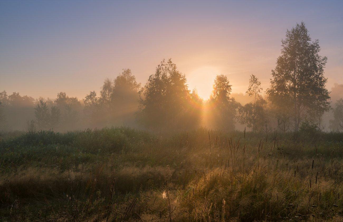 луг, рассвет, лето, туман, Галанзовская Оксана