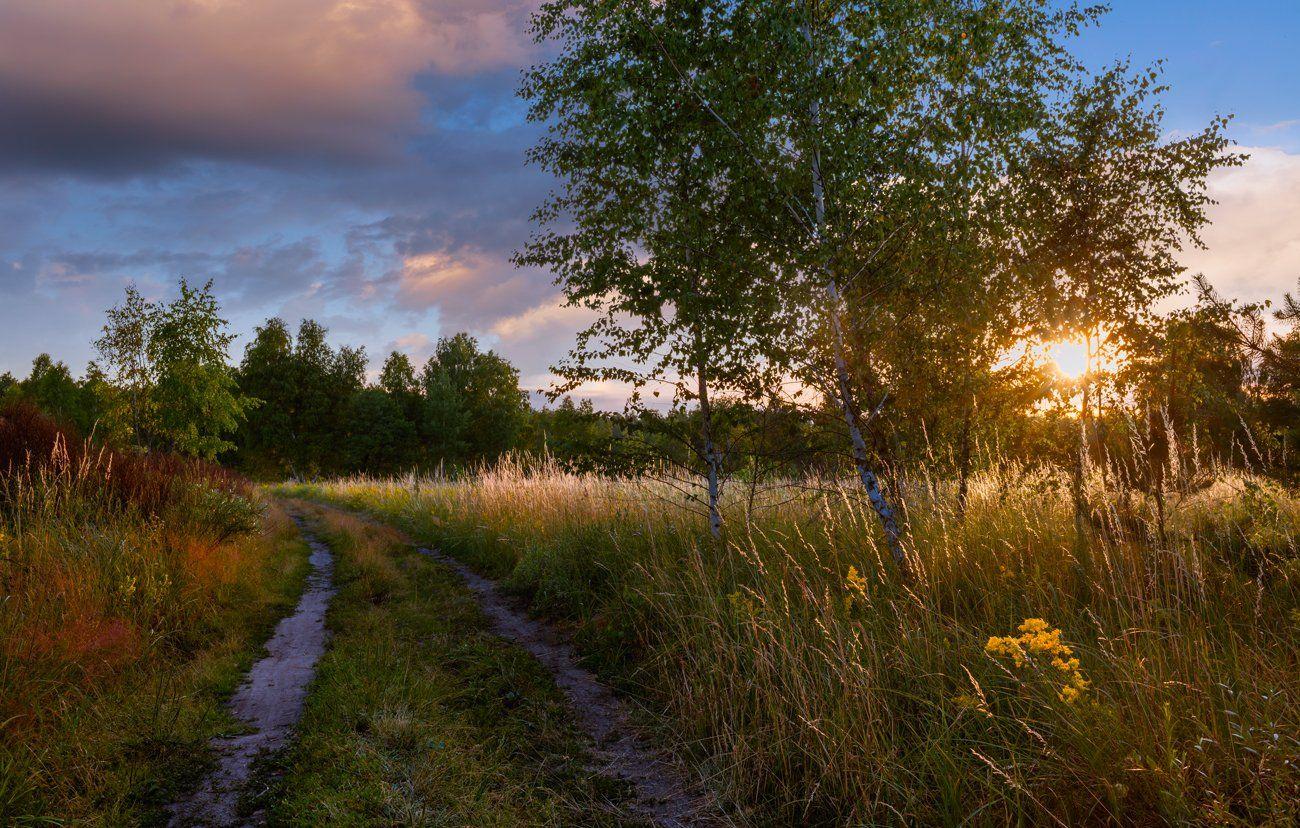 луг, июль, лето, закат, тропа, Галанзовская Оксана