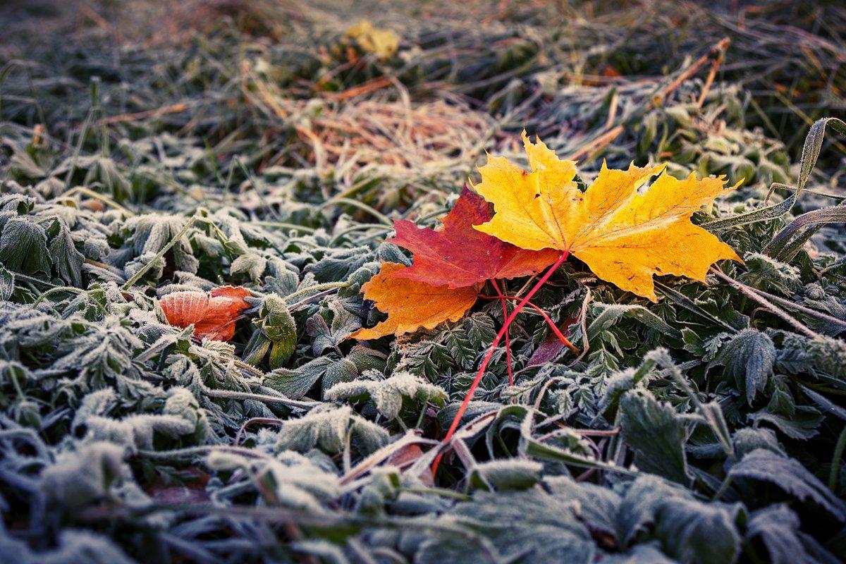 Осень. Листья., Юрий Чернов