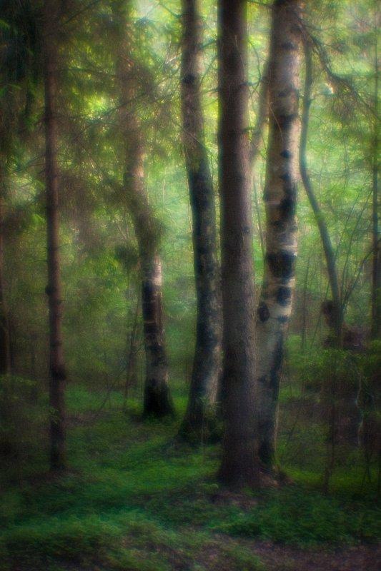 monolens, монокль, пейзаж, природа, пиктореализм, свет, Шарапов Сергей