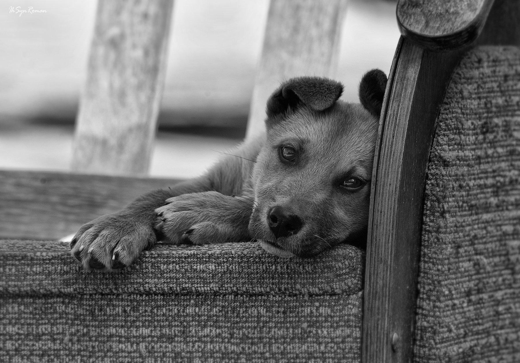 пёс,собака,улица,двор,кресло, Roma Krasov ( Chitinskiy )