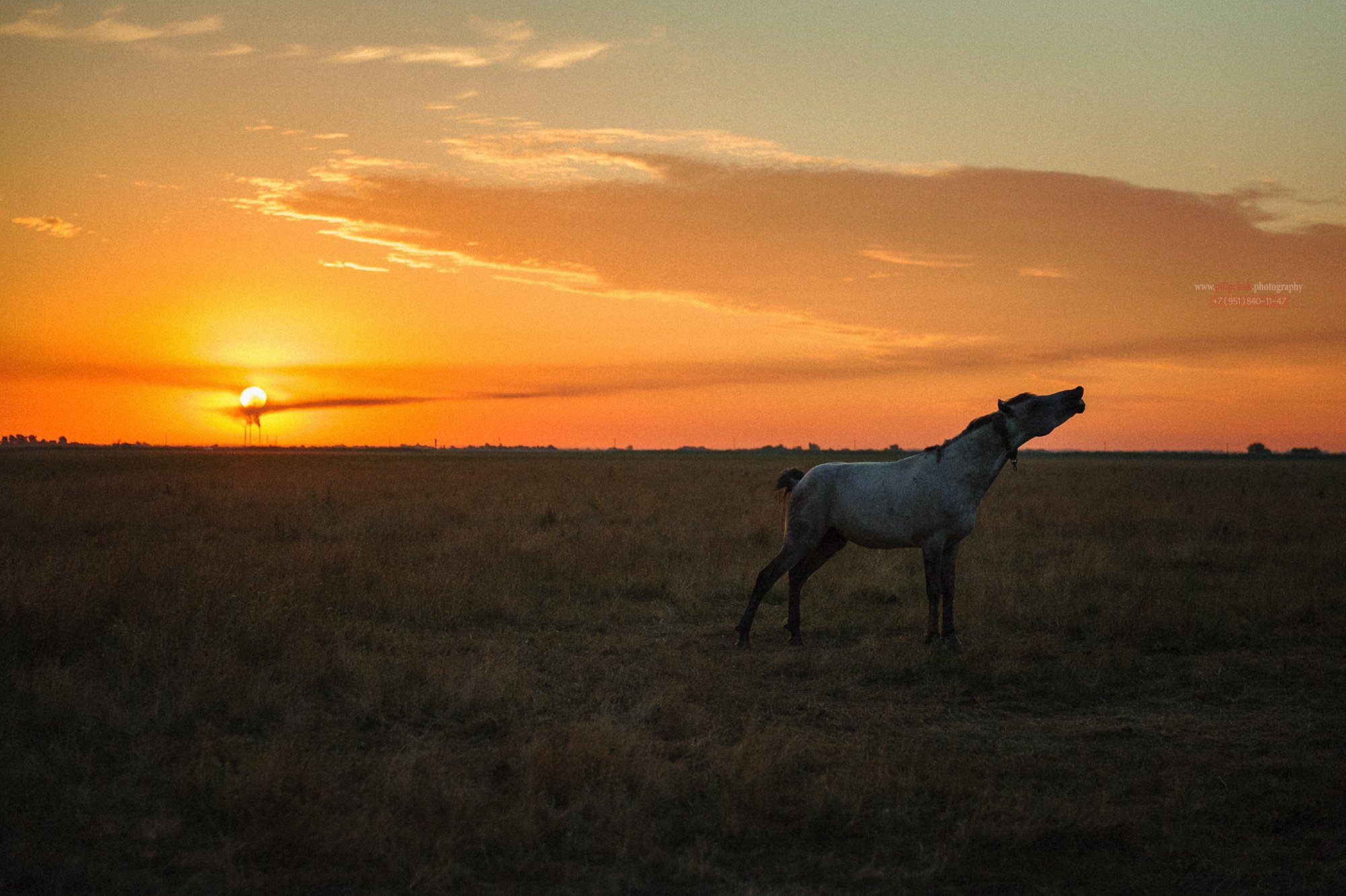 лошадь, пейзаж, восход солнца, в поле лошадь, Пилипчук Константин