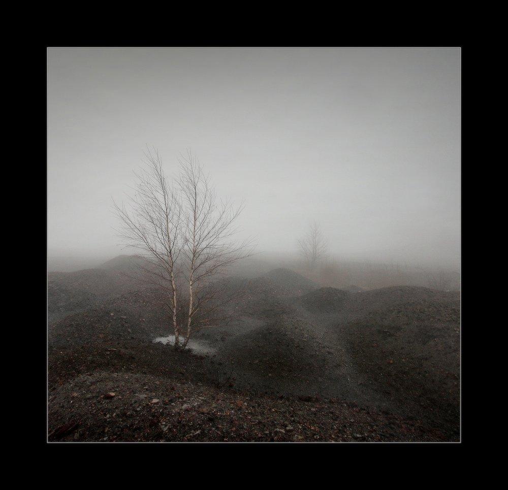 осень,террикон, шахта, туман, берёзка, Петриченко Валерий