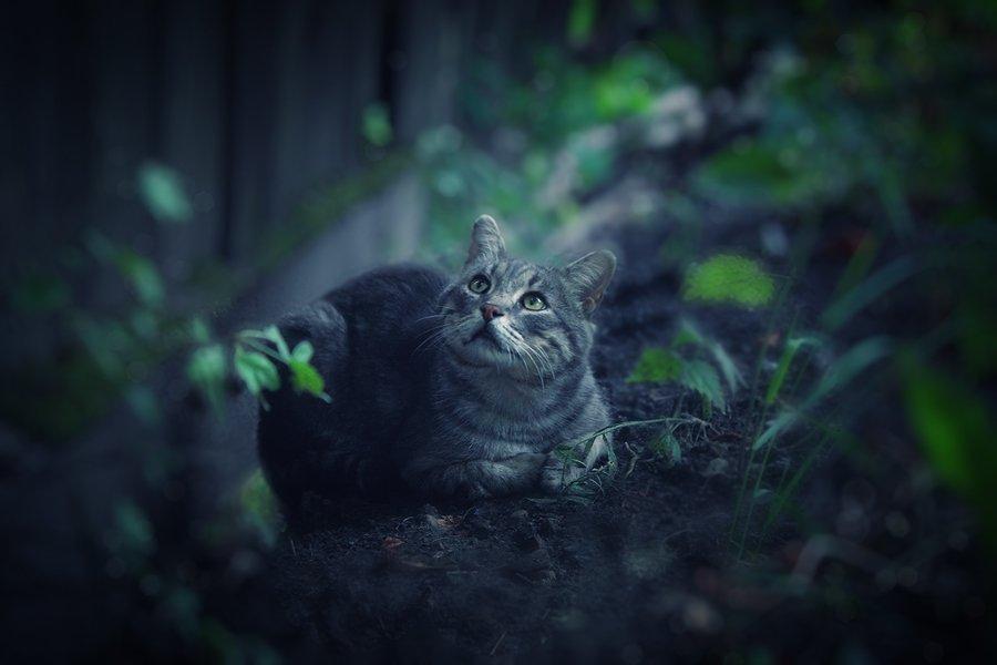 кот, Alina Chaban