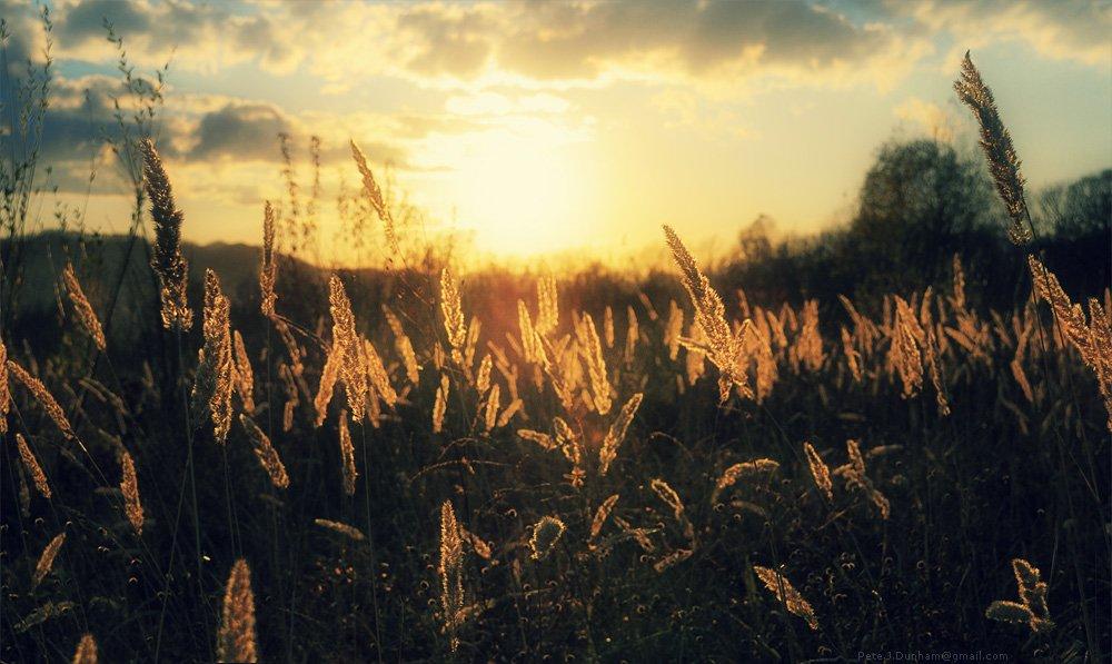 приморье, вечер, закат, приморский, край, поле, трава, бурьян, колоски, Pete.J.Dunham