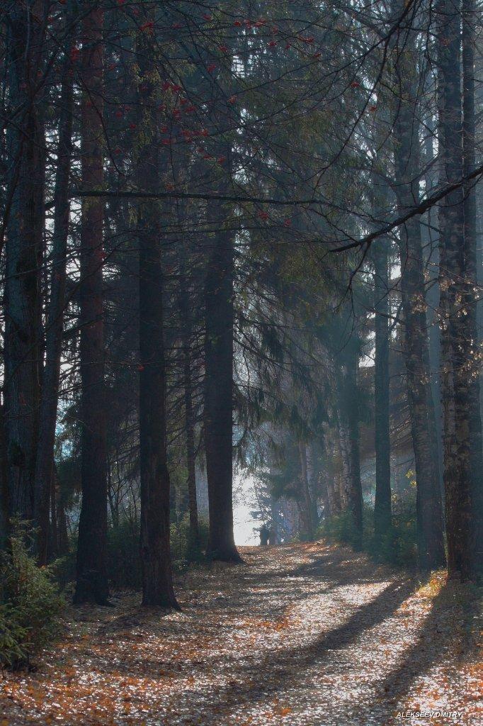 туман,лес,осень, Дмитрий Алексеев