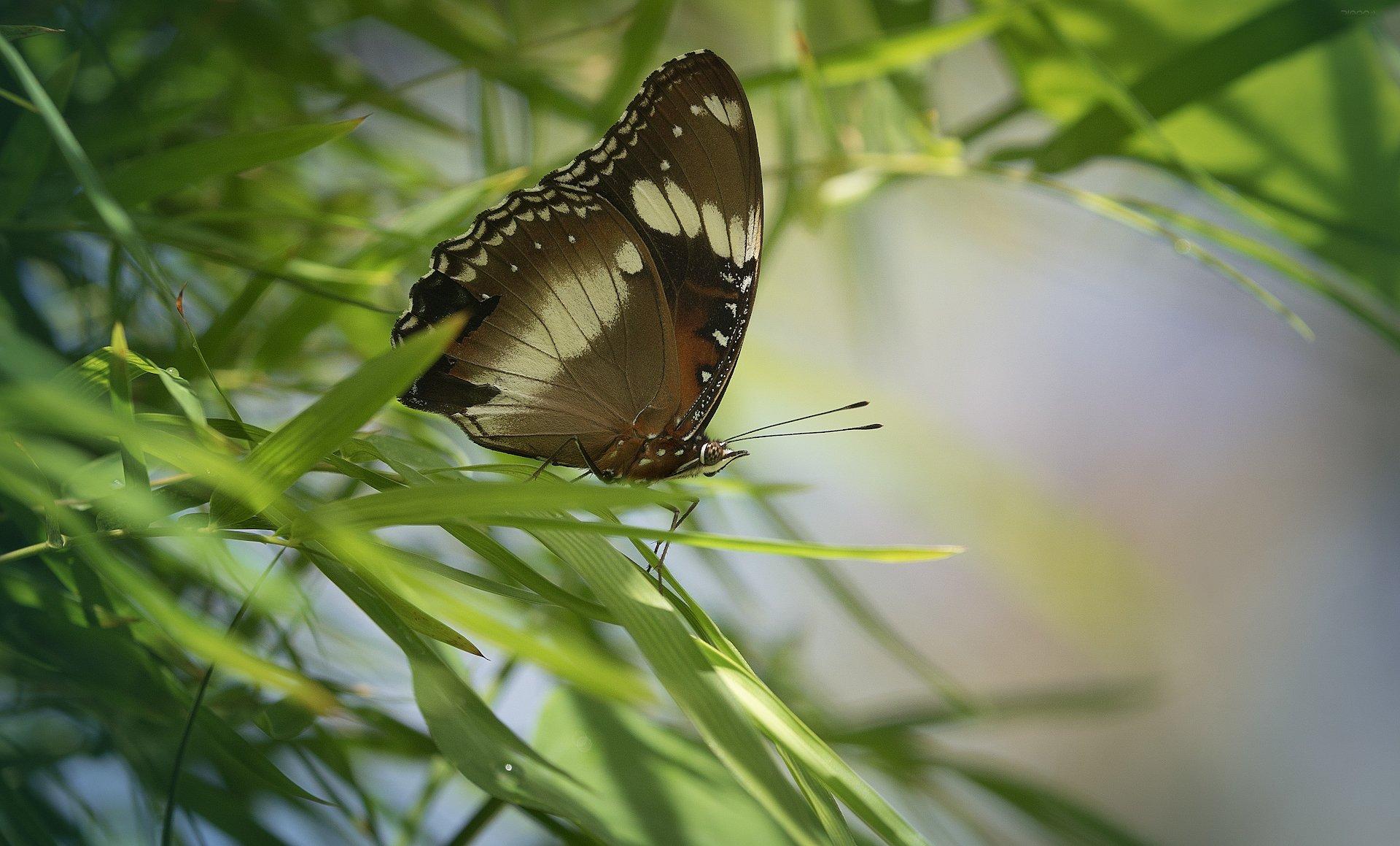 природа, бабочки, макро, индонезия, Дмитрий Посевич