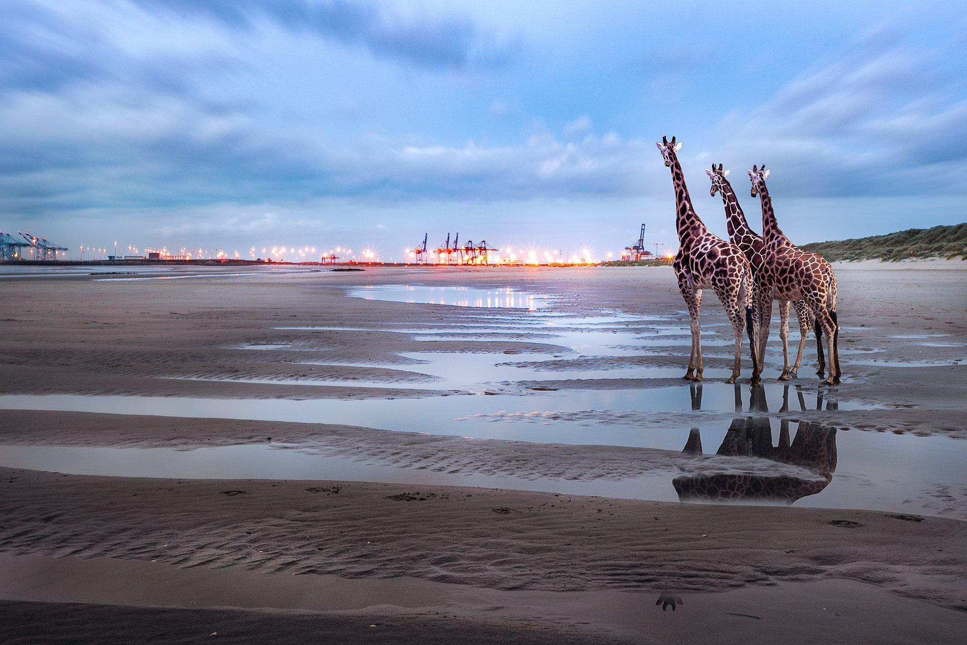 море, пляж, жирафы, подъемные краны, фонари, отражение, лужи, литораль, Андрей Огнев