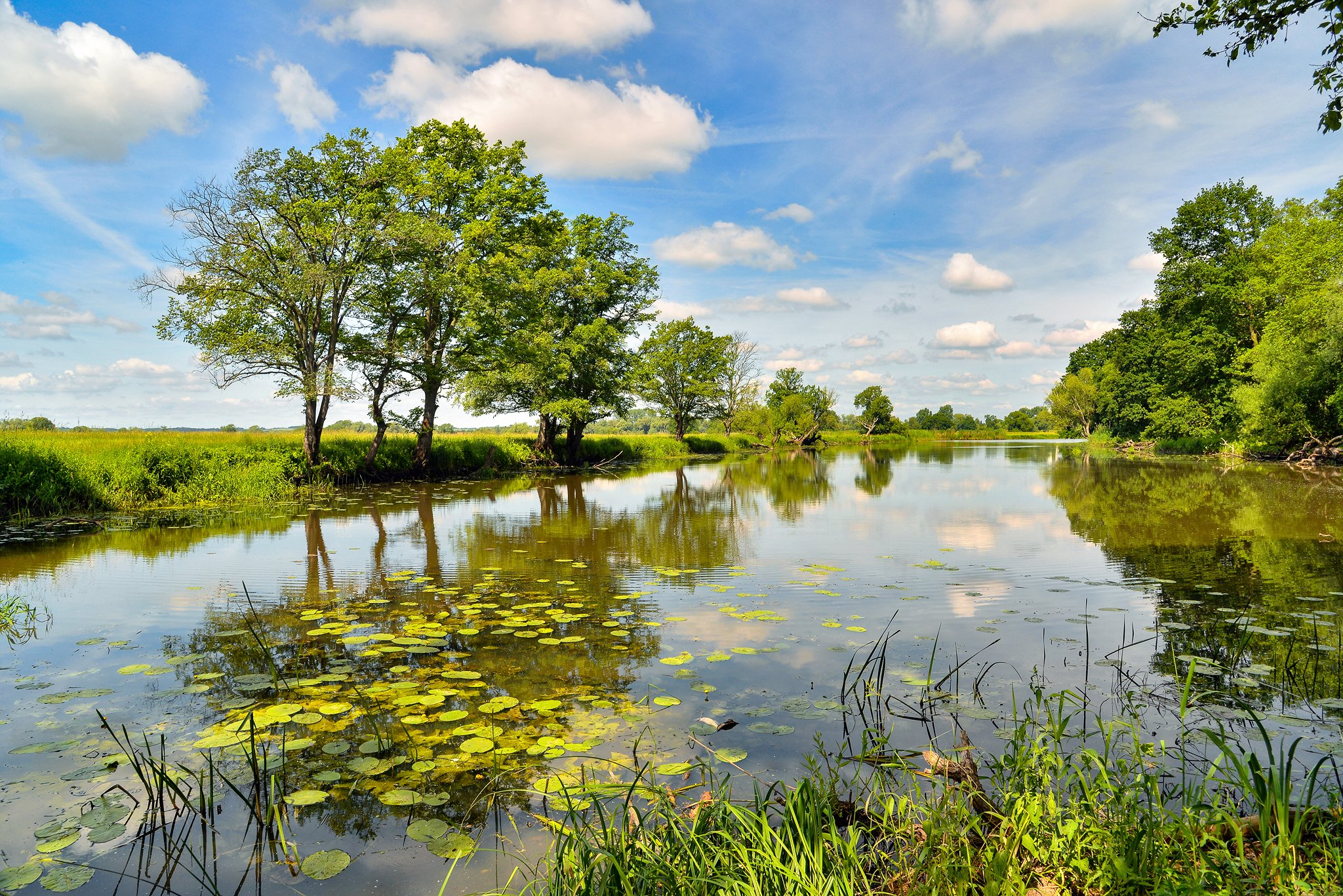 odertal national park water tree trees clouds sky green schwedt oder lake, Radoslaw Dranikowski