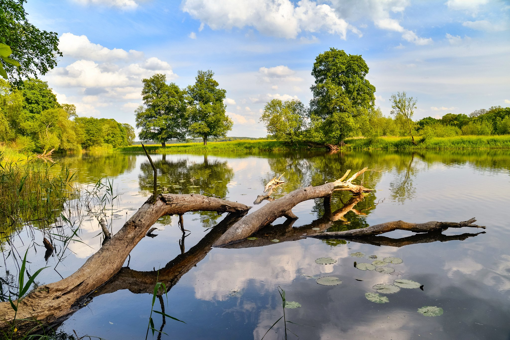 odertal national park water tree trees clouds sky green schwedt oder lake blue, Radoslaw Dranikowski