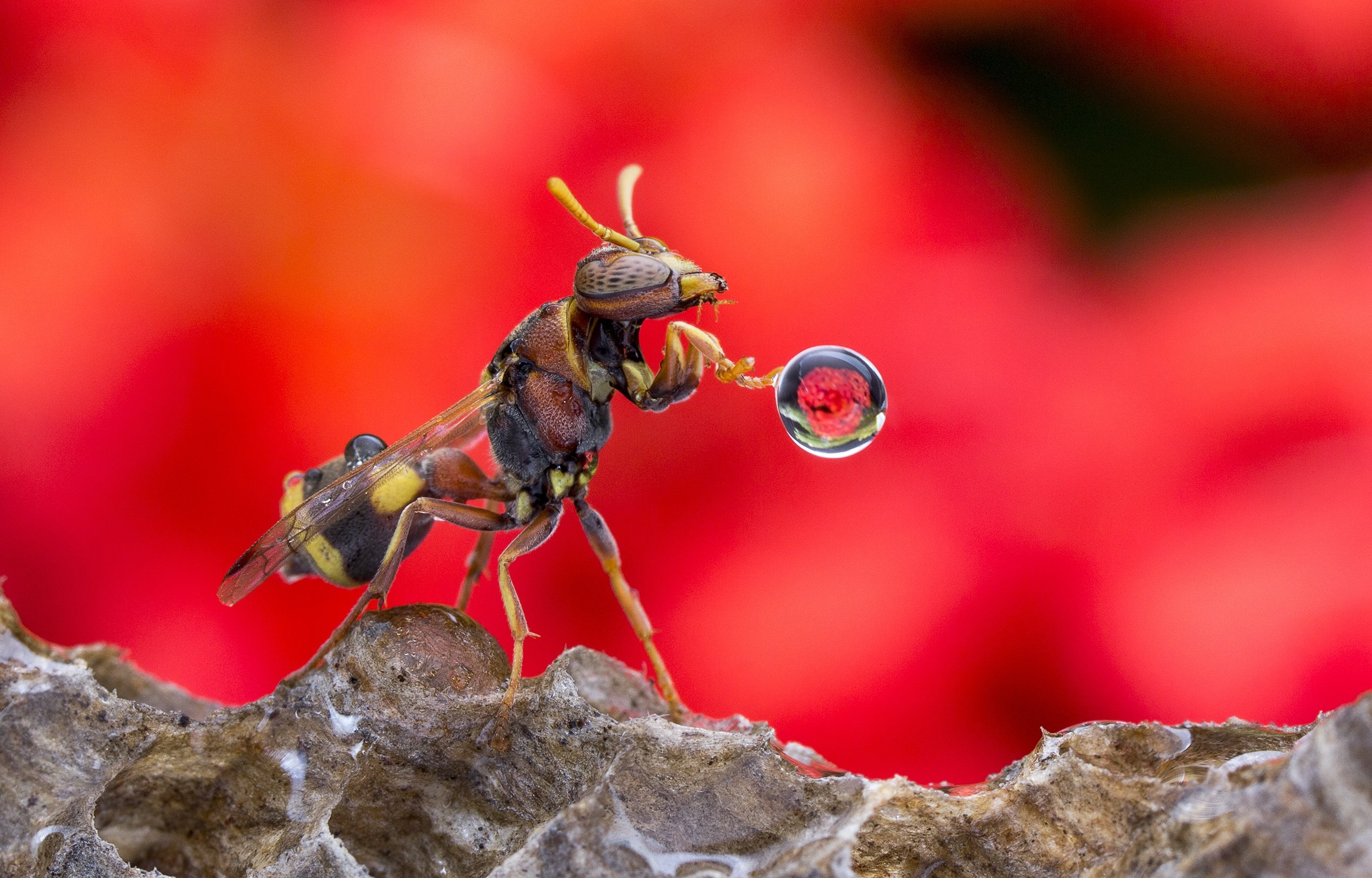 #macro#wasp#waterbubble#reflection#colors, Lim Choo How