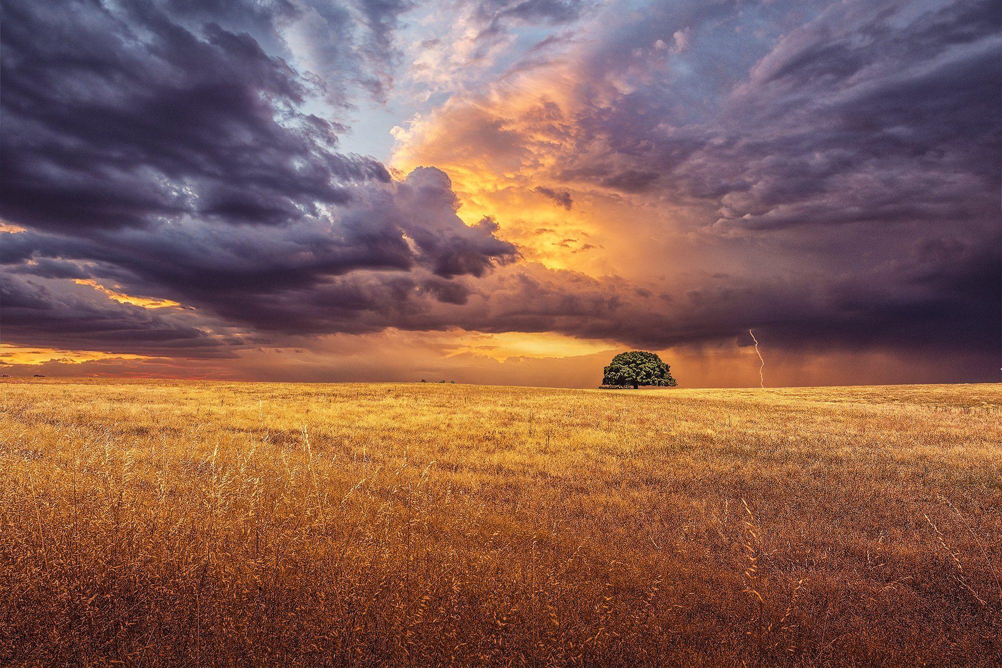 tree, fields, sunset, clouds, cloudscape, storm, sun, purple, orange, colorful, beauty, Antonio Bernardino