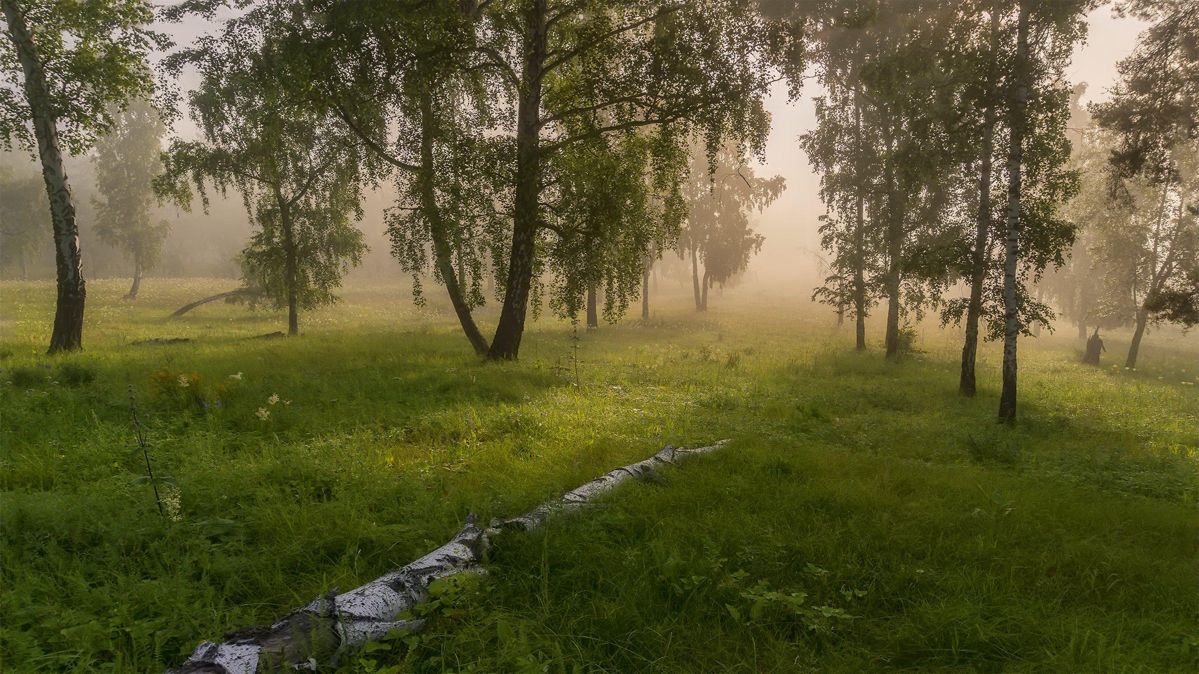 утро, рассвет, восход, туман, лучи, Леонид