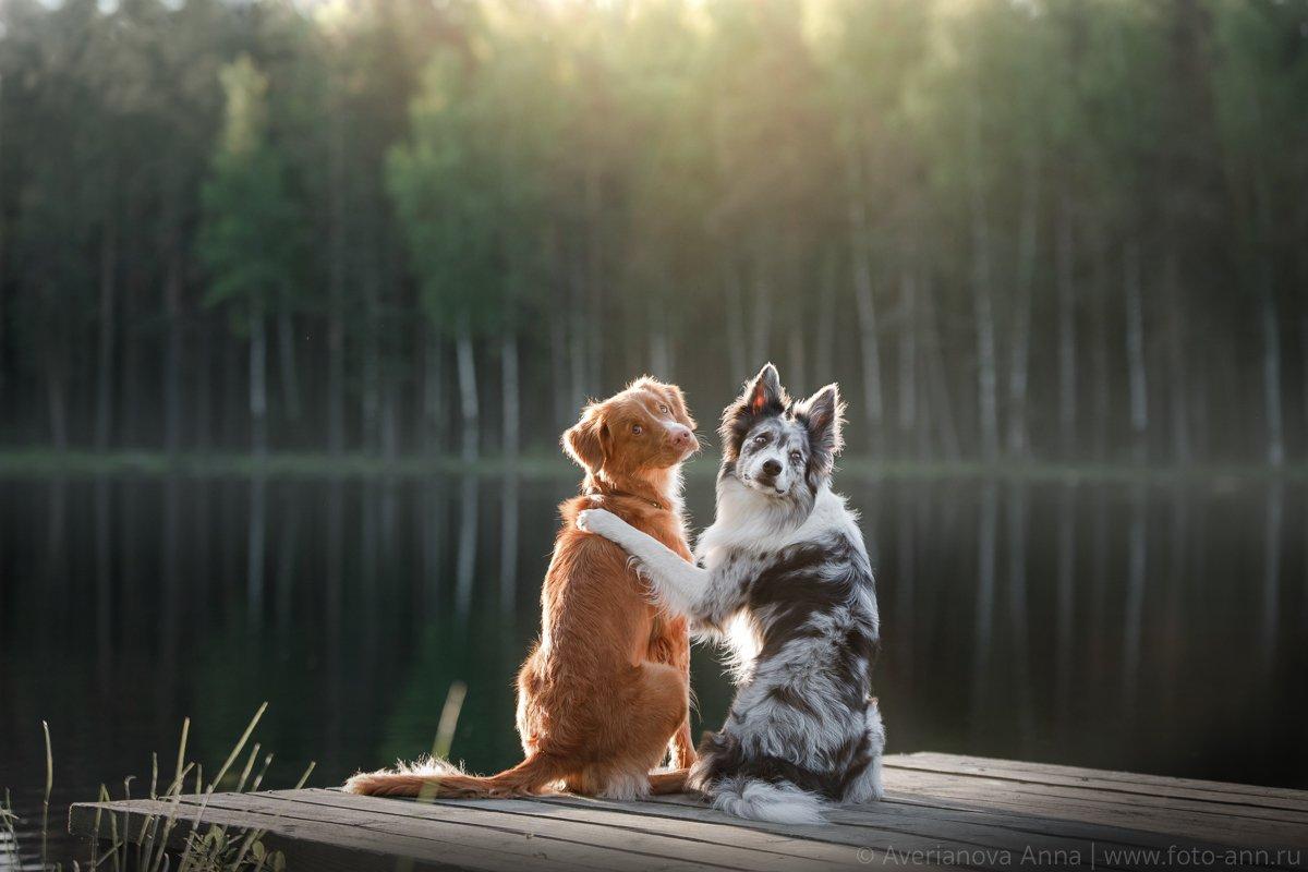 собаки, природа, озеро, Анна Аверьянова