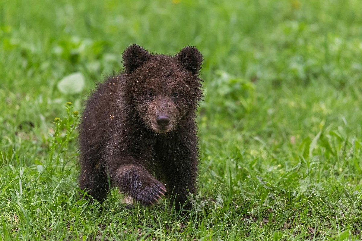 башкирия, национальный парк, медвежонок, заповедный пояс, автоэкспедиция, Кирилл Уютнов