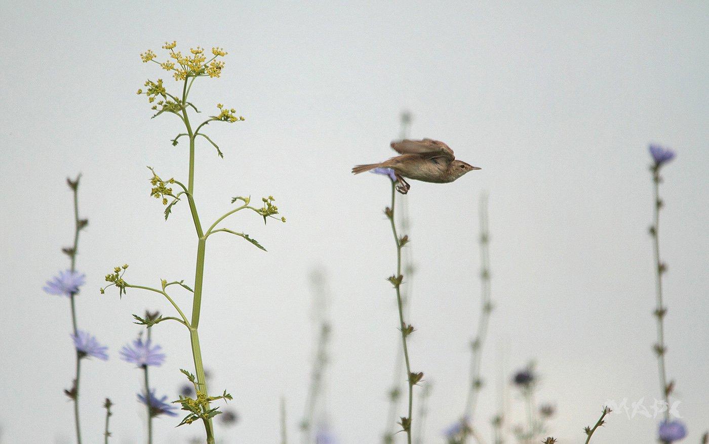 животные птицы лето, Шангареев Марс