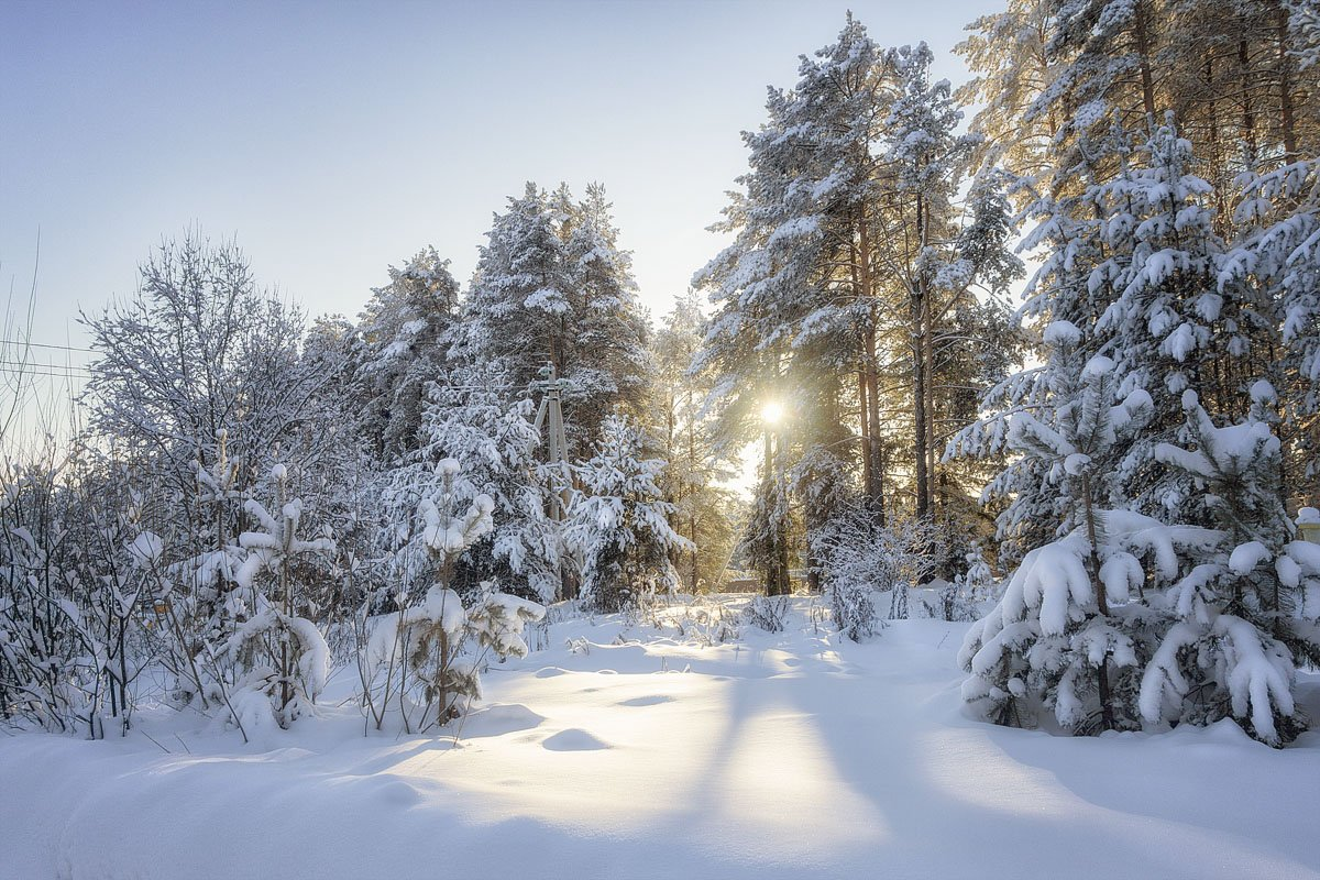 зима, снег, солнце, закат, сугробы, мороз, деревья, Пушкарев Николай
